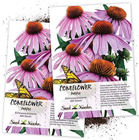 Amazon Com Seed Needs Purple Coneflower Echinacea Purpurea