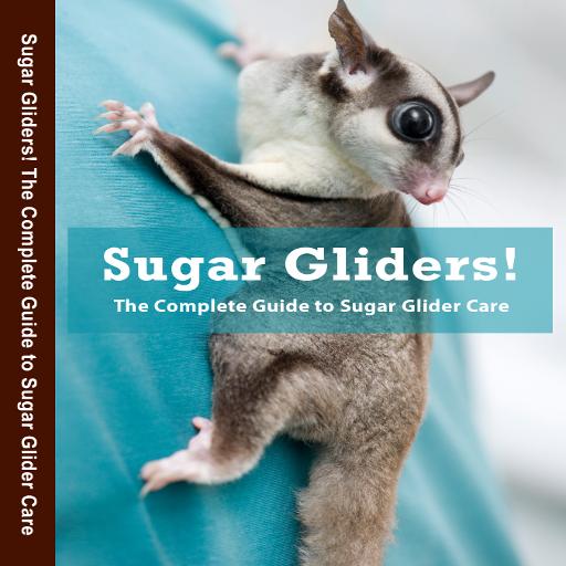 - Sugar Glider Care!