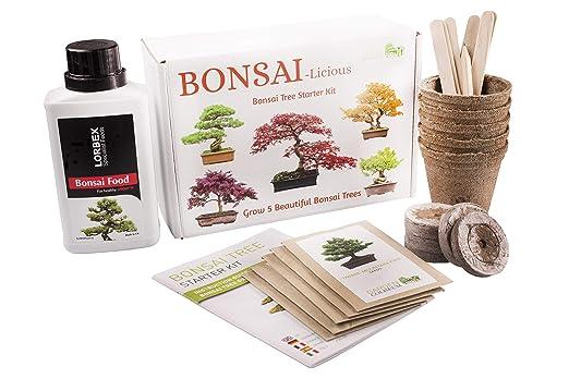 Kit de plantación de bonsáis - Planta tus propios bonsáis - Set de regalo de cultivo - Fertilizante de bonsáis Incluido. - Kit de principiante con 5 ...