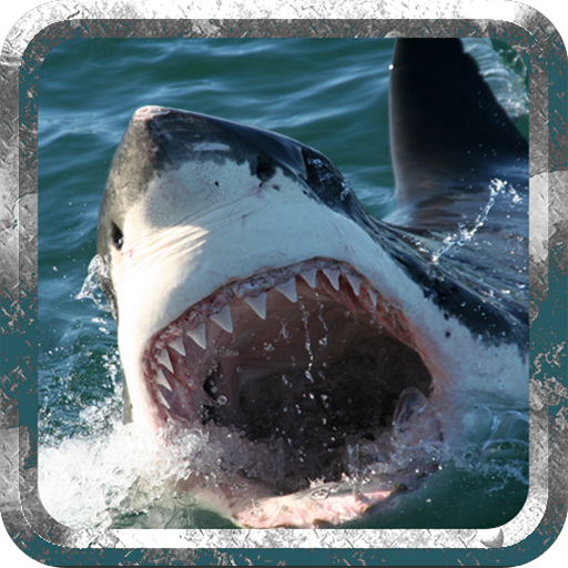 Angry Shark - Wild Attack (Shark Games Online)