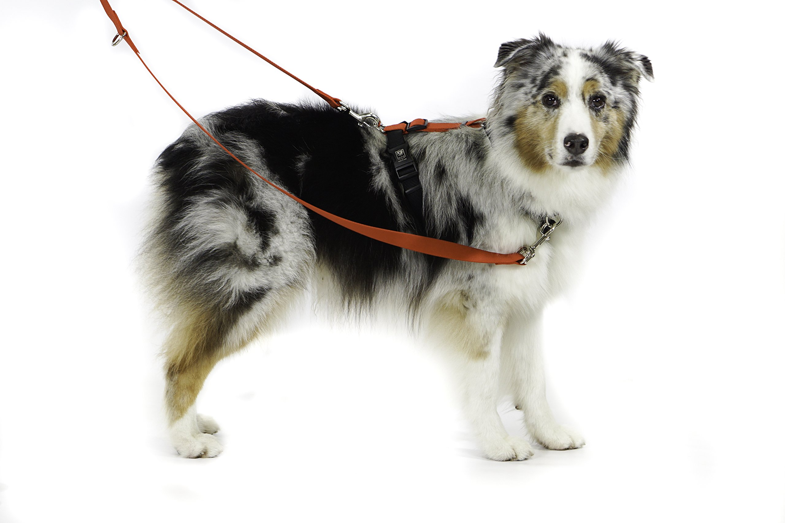 Blue-9 Pet Products Balance Harness Buckle Neck (Medium, Sky Blue) by Blue-9 Pet Products