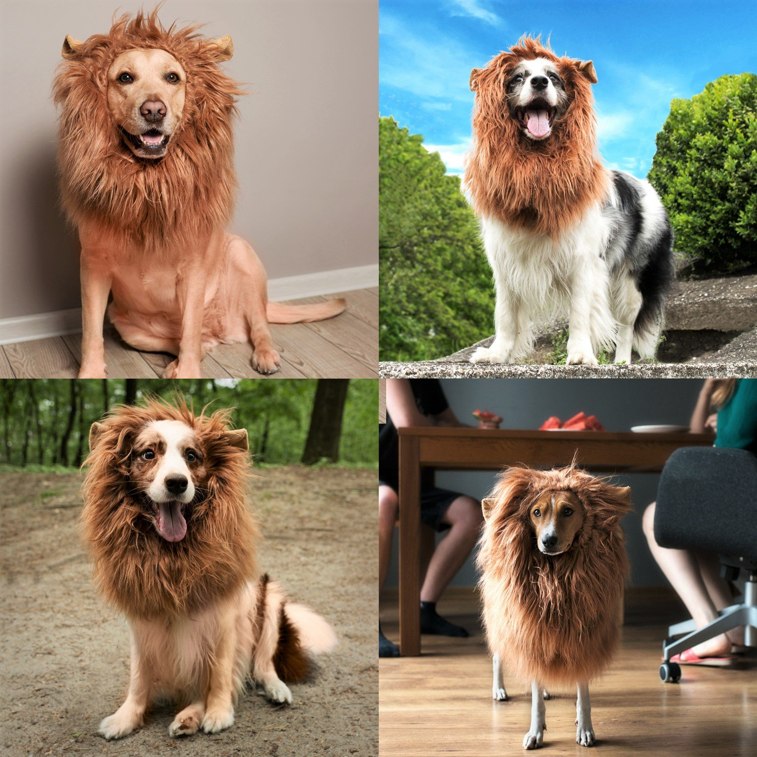Lion Mane for Dog with Frisbee - Premium Quality, Realistic, Hilarious & Eye Catching Dog Lion Mane - Dog Costume with Ears - Comfortable Lion Wig for Medium and Large Dogs - Perfect Dog Gift by Joy4Pets (Image #7)
