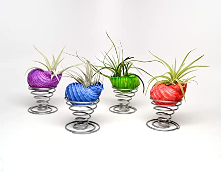 Amazon Com Pixie Glare Plant Octopus Kit 4 Pcs Dyed Shells 4
