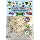 Clark&Co Organic 150 Live Ladybugs - Good Bugs for Garden - Pre-Fed Hippodamia Convergens - Guaranteed Live Delivery!