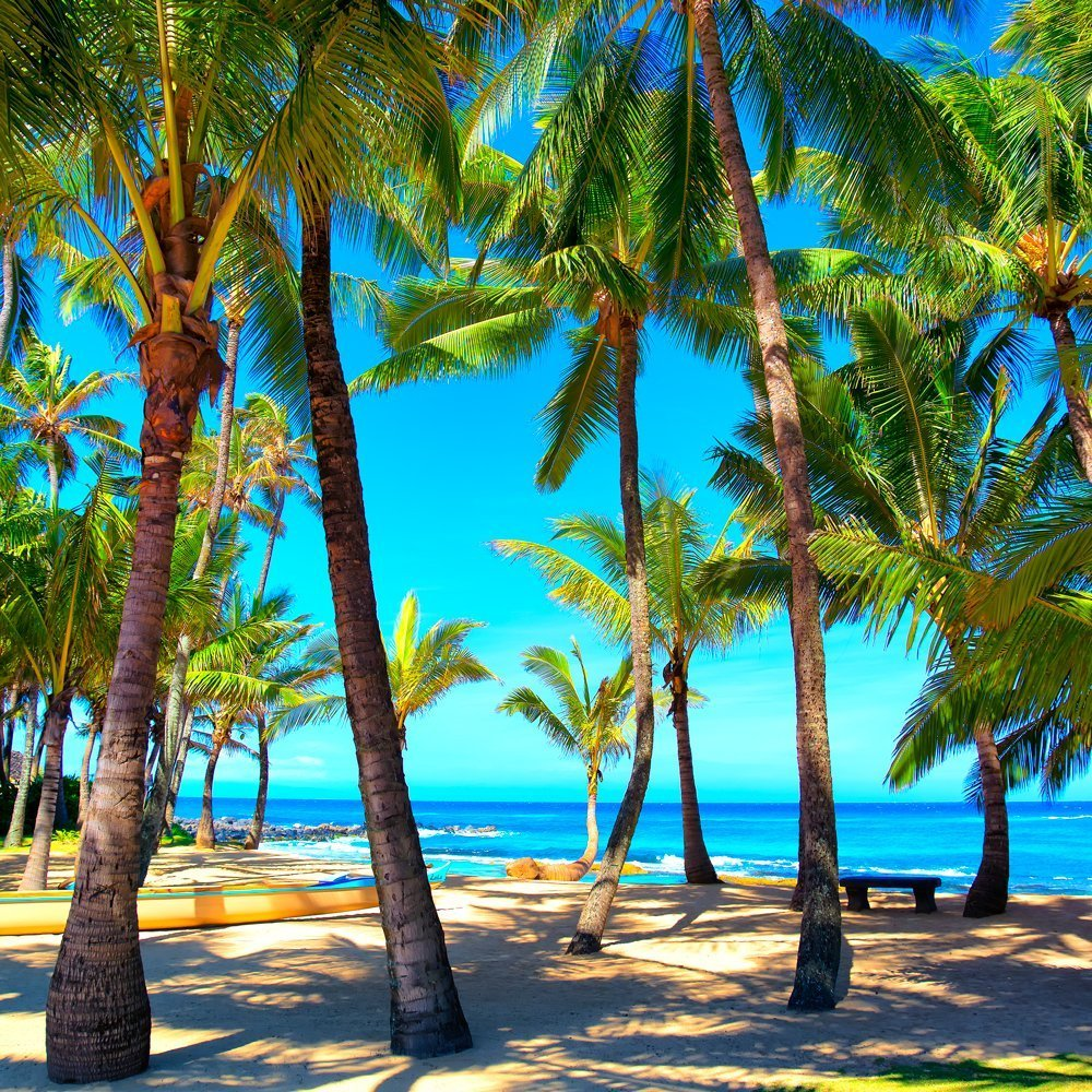 Maui Hawaii Aluminum Metal Print, Tropical Island Day, Palm Tree Photo, Beach Decor Print