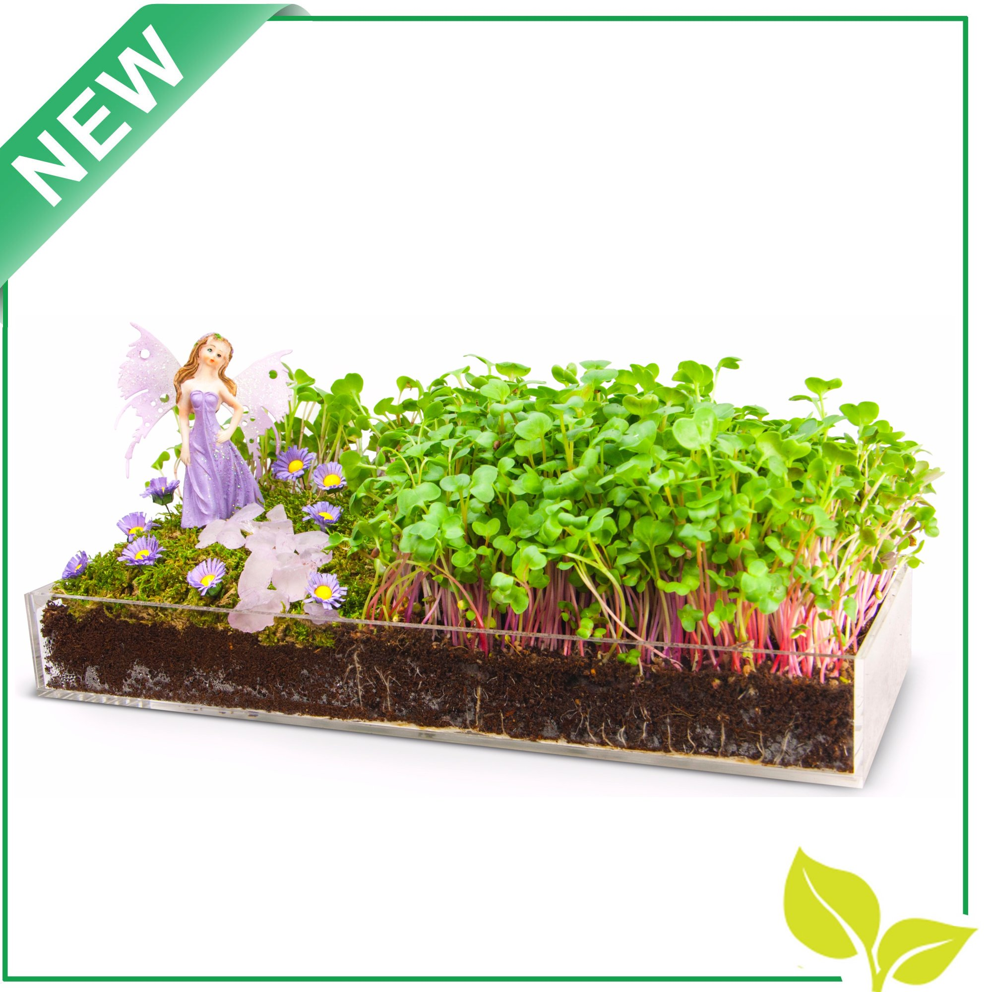 Window Garden Edible Fairy Garden Kit with an Enchanting Fairytale and Accessories by Window Garden (Image #2)