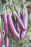 Seedstores : Hybrid Brinjal Seeds Purple long for Terrace Kitchen Gardening 50 Nos