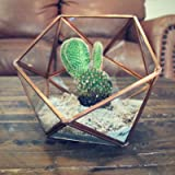 Oh So Relevant Geometric Glass Plant Terrarium - Large, Rose Gold