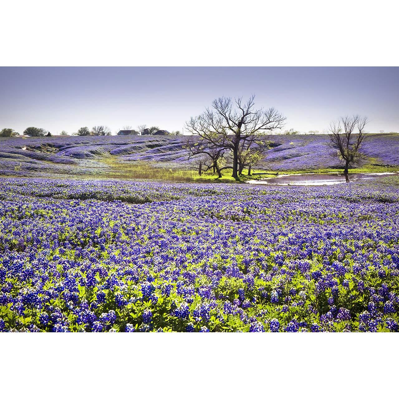 Amazon Com Texas Bluebonnet Photography Field Of Dreams Photo