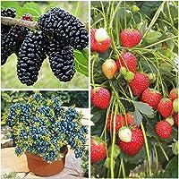 Earth Hopper All Season Dwarf Fruit Seeds Combo Mulberry, Blueberry, Strawberry -5 Seeds Each