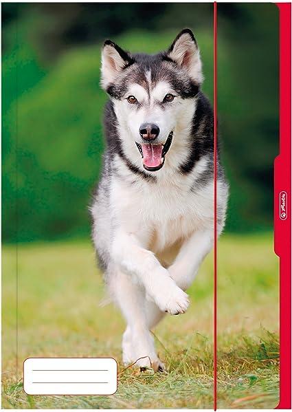 Herlitz Sammelmappe Hund Motiv DIN A3
