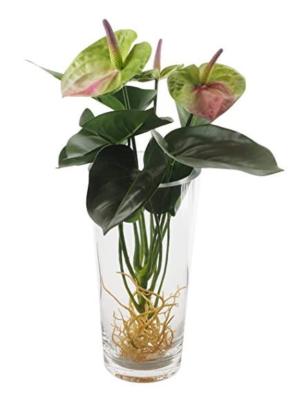 Amazon Highly Natural Decorative Anthurium With Glass Vase Feng