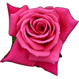 ROSE FABULOUS AT 60 GiftaplantTM 60th BirthdayGifts For Him Or Her SisterBrother60th