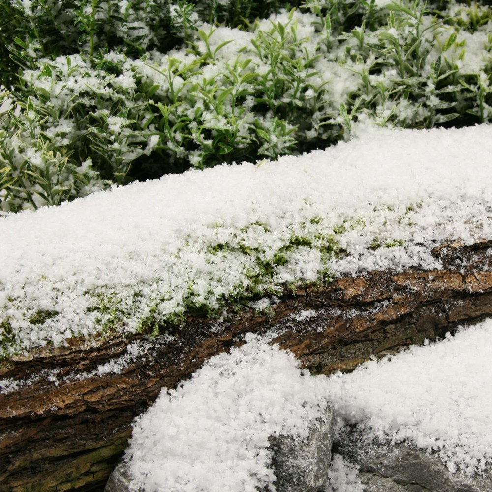 Display Snow - Medium - 2.35kg box Snow Business