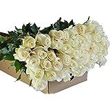 Farm2Door Wholesale Roses: 50 Fresh White Roses (Long Stemmed - 50cm) - Farm Direct Wholesale Fresh Flowers