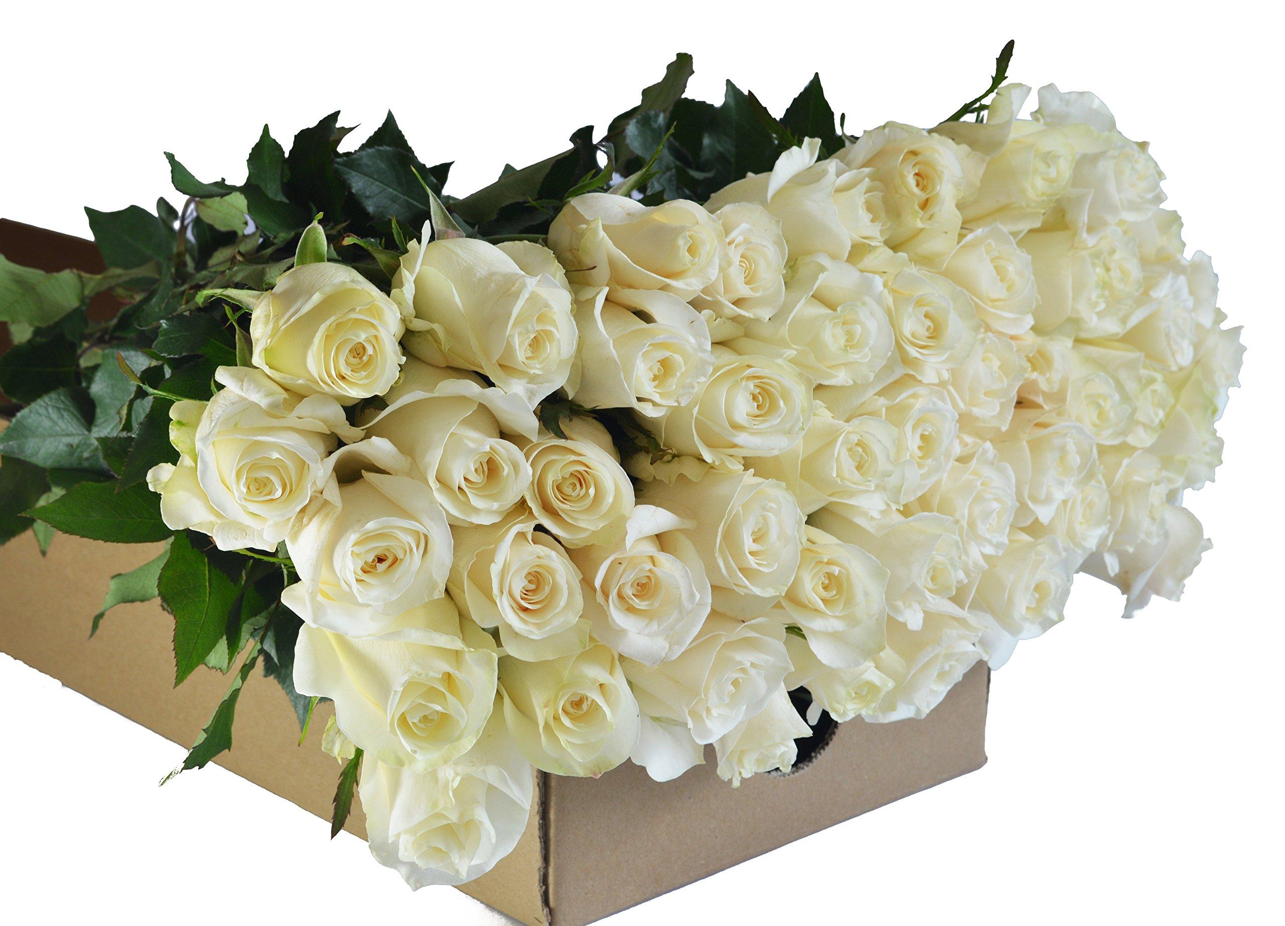 Amazon.com : Farm2Door Farm-Fresh Hydrangeas: 15 Fresh White ...