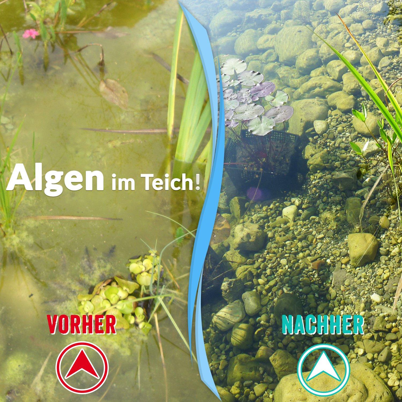 Sparset Herbst Winter Hochwirksame Produktkombination Gegen Algen