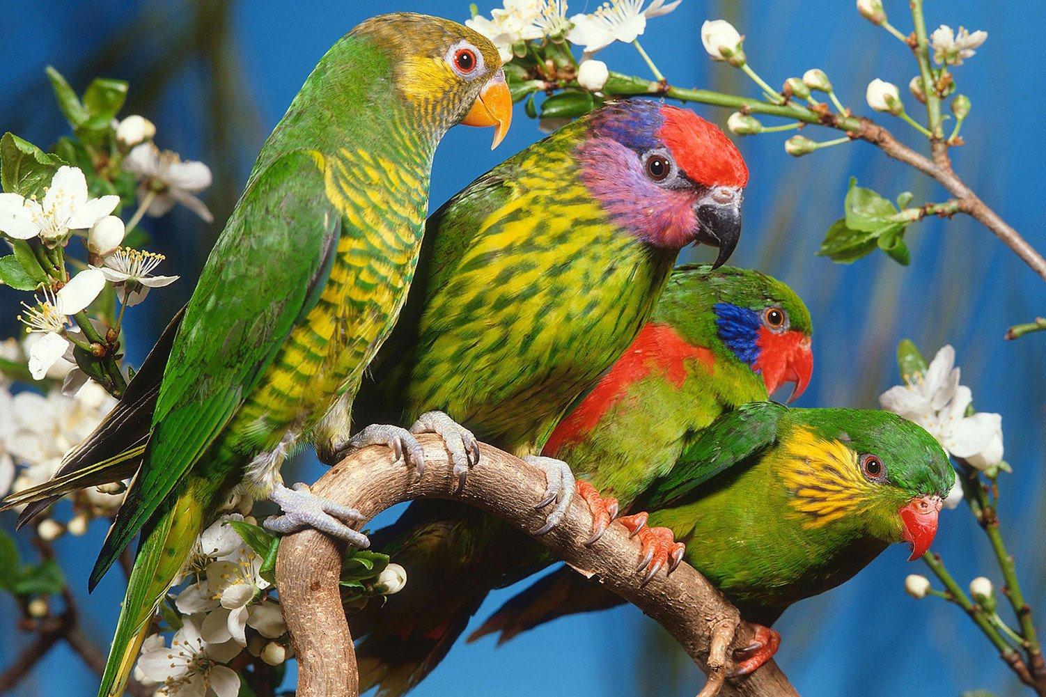 CHOIS Custom Films CF3313 Animal Parrots Birds Flowers Glass Window DIY Stickers 4' W by 3' H