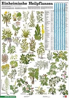 Heimische Pflanzen schreiber naturtafeln einheimische giftpflanzen amazon de bücher