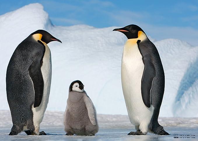 Jumbo 17049 - Planeta Tierra - Las familias de animales / pingüinos - 150 piezas: Amazon.es: Juguetes y juegos