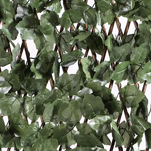 Celosia Extensible con Hojas Basic 1x3: Amazon.es: Jardín