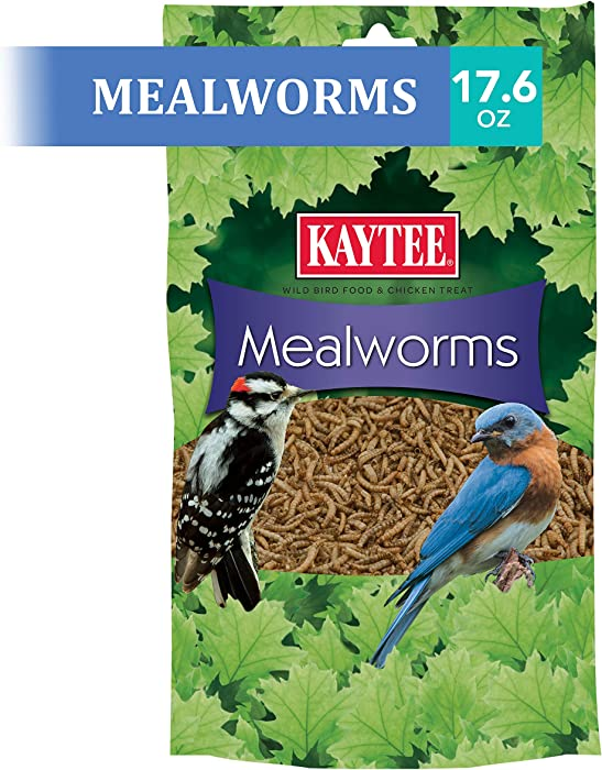 Top 10 Baby Bird Insect Food
