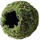 "Galápagos (05348) Mossy Cave Hide, 6"", Green Sphagnum"