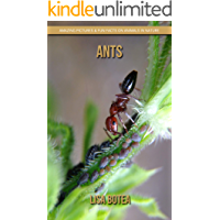 Ants: Amazing Pictures & Fun Facts on Animals in Nature
