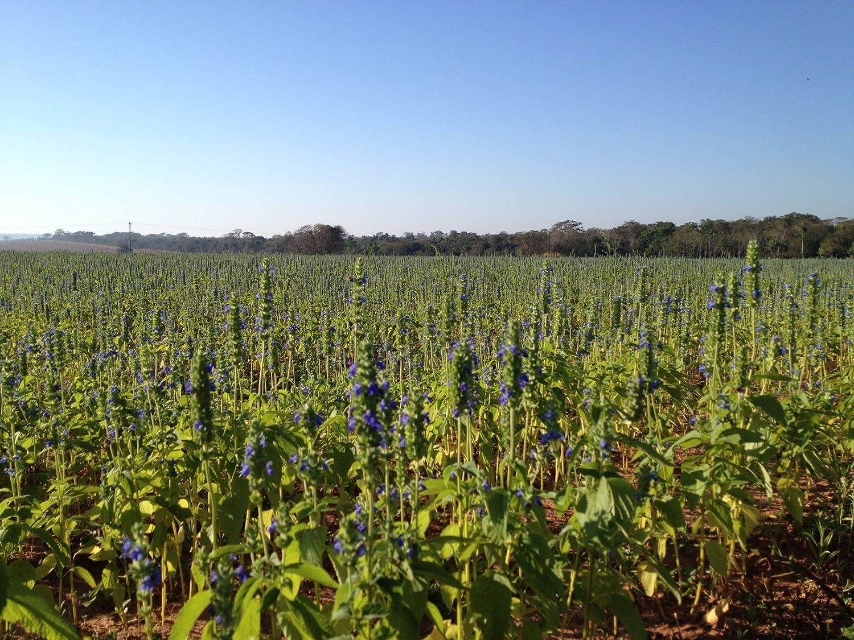 Semillas de Chia 100% Orgánico - Calidad Superior 1Kg - NATURACEREAL: Amazon.es: Alimentación y bebidas