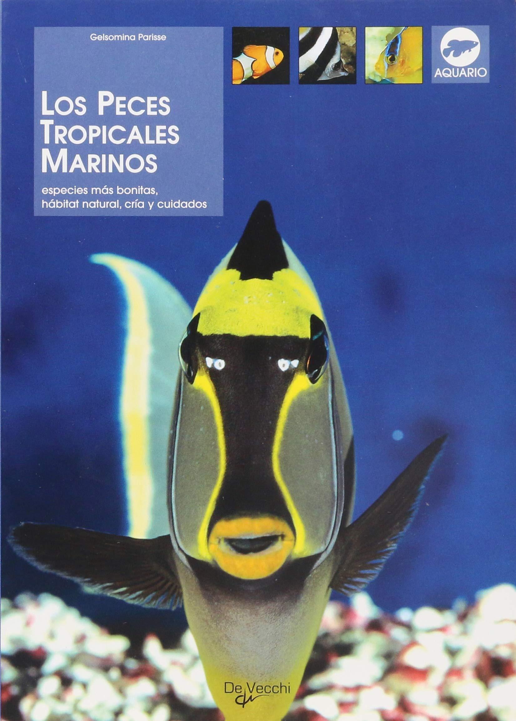 Los peces tropicales marinos (Animales): Amazon.es: Gelsomina ...