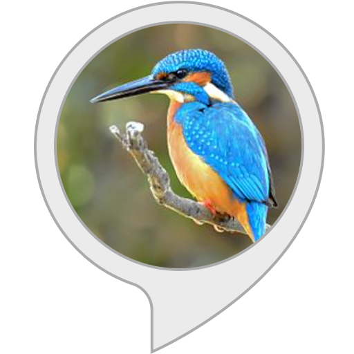 Awesome Kingfisher Game