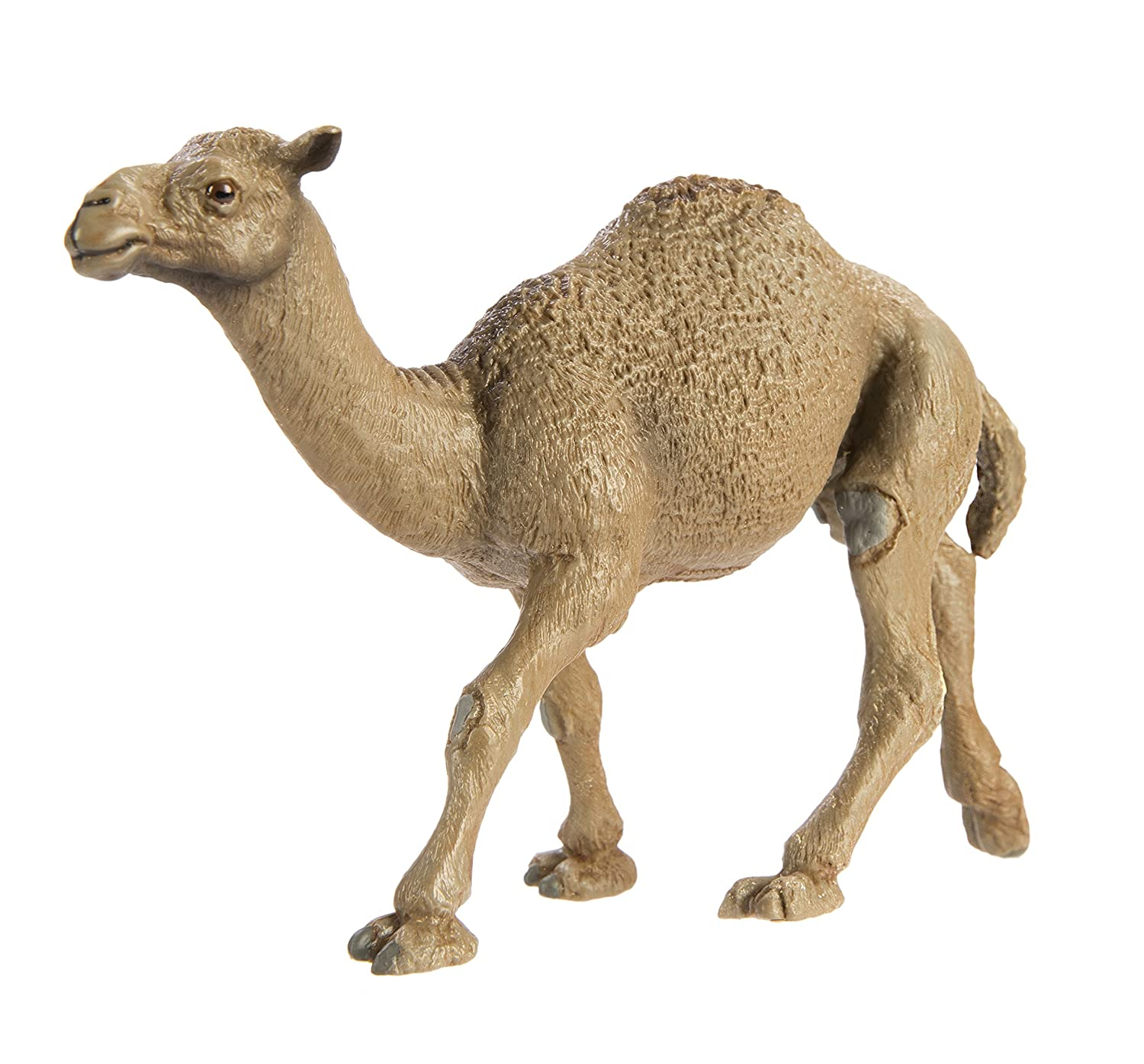 Amazon.com: Safari Ltd Wild Safari Wildlife Dromedary Camel: Toys ...