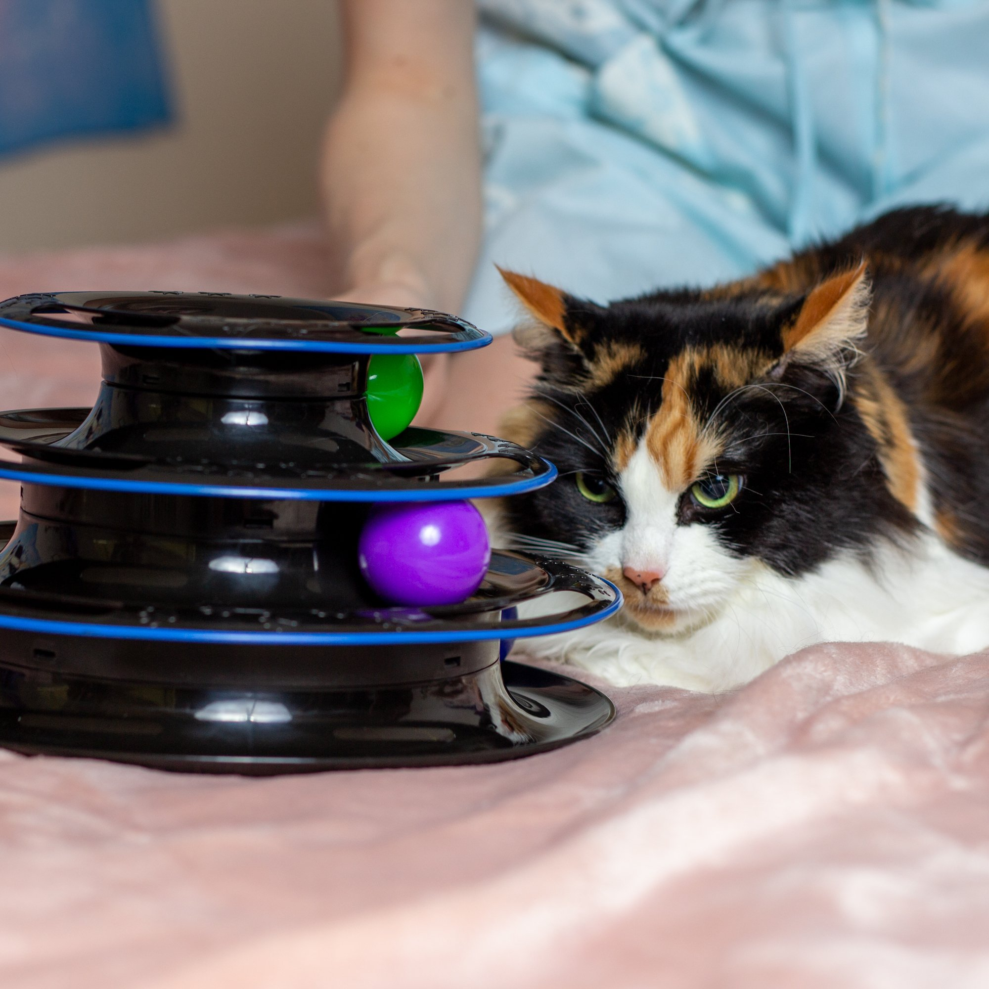 Amazing Cat: Amazing Cat Roller Toy By Easyology Pets: Super Fun 3