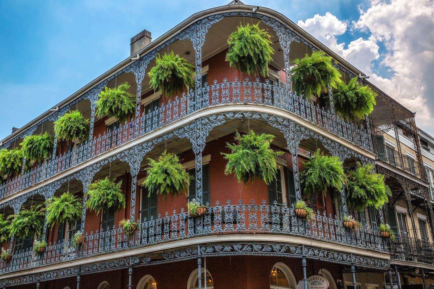 Picture of Building with Hanging Ferns in French Quarter Southern Louisiana Decor 5x7 to 40x60 New Orleans Photography Art Print
