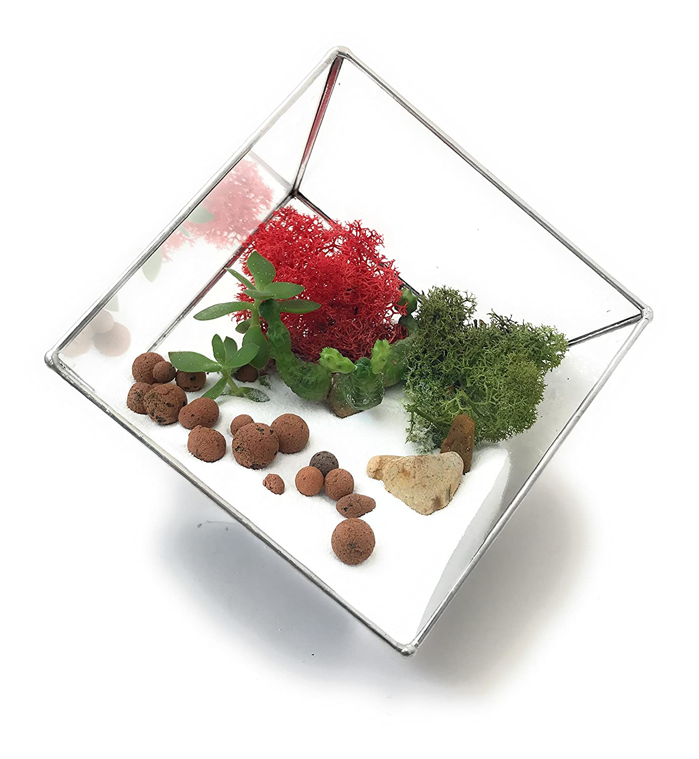 Premium Reindeer Moss Terrarium Kit with Plants Premium Terrarium Kit with Beautiful Reindeer Moss Limited Collection Packed and Made in England (Terrarium Kit with Plants)