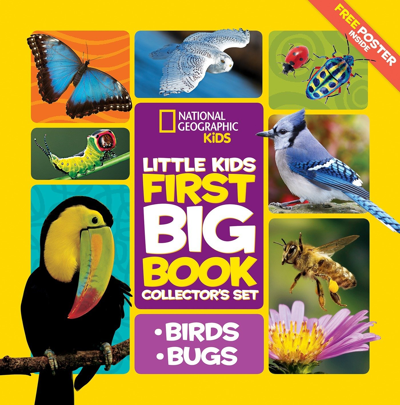 Little Kids First Big Book Collector's Set: Birds and Bugs PDF