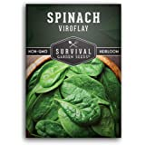 Survival Garden Seeds - Viroflay Spinach Seed for Planting - Packet with Instructions to Plant and Grow Your Home…