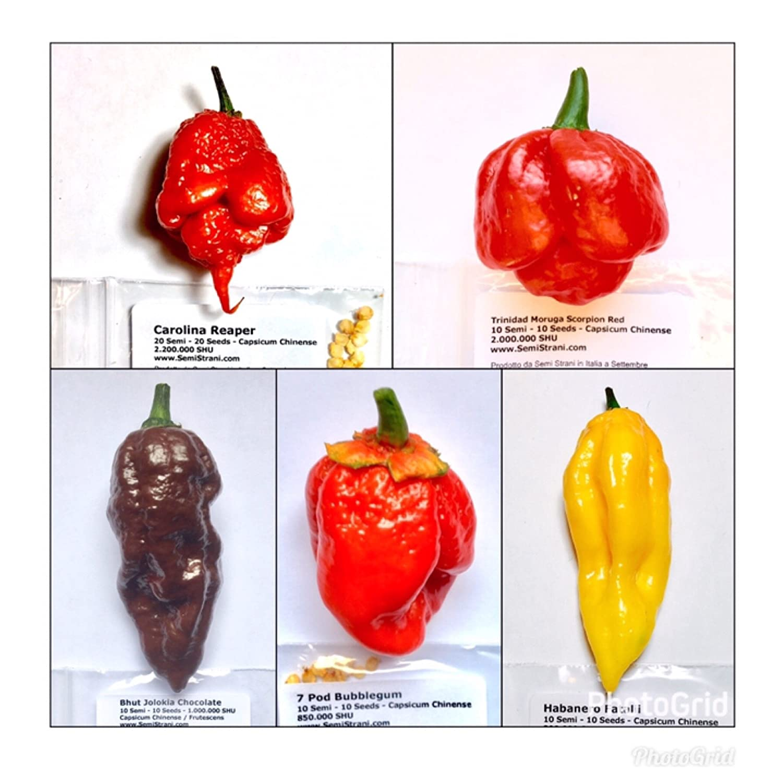 seeds 5 HOT and TASTY! Red Habanero Chili