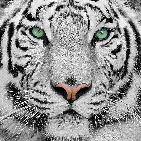 Lwcx La Tigre Bianca In Bianco E Nero Animale 3d Wallpaper Murals