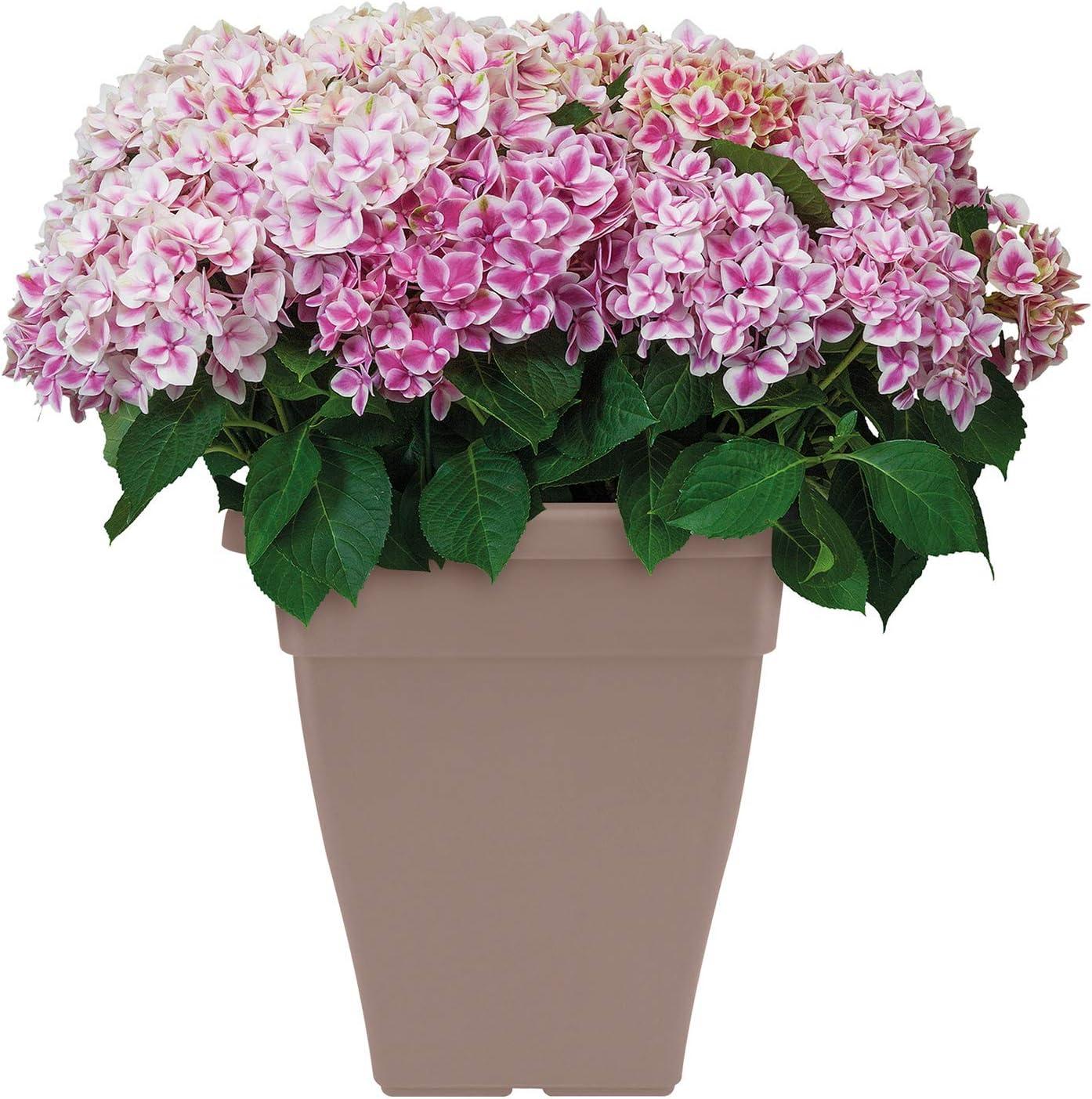 Elho Torino Campana Carr/é 46 /Ø 46.7 x H 40.5 cm Pot De Fleurs Ext/érieur Taupe
