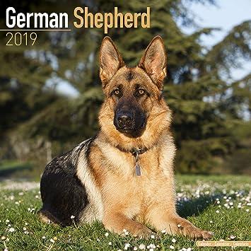 Amazon Com German Shepherd Calendar 2019 Dog Breed Calendar