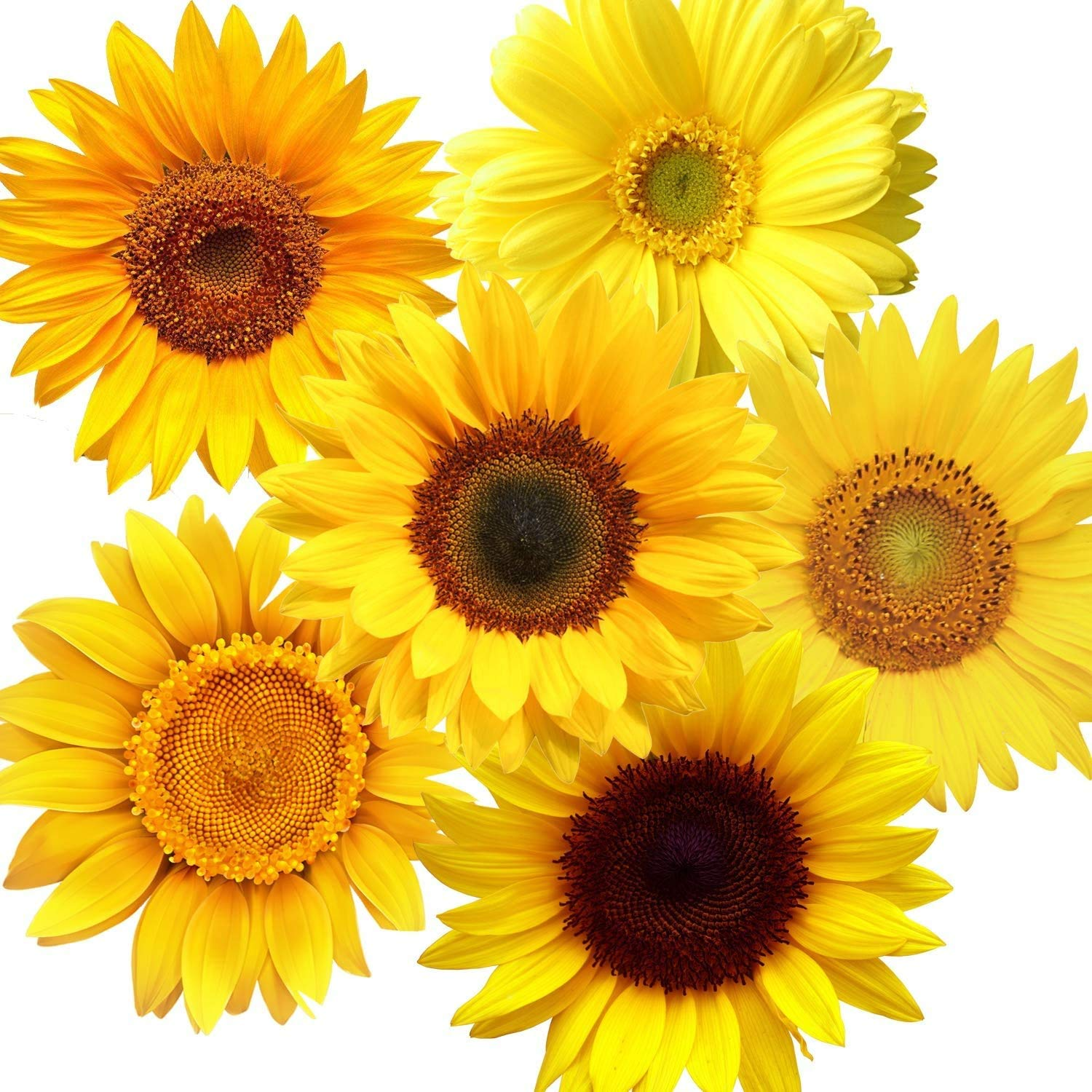 72 Pieces Removable Sunflowers Wall Stickers Peel and Stick 3D Yellow Flower Wall Decals Self-Adhesive Sunflower Stickers for Kids Baby Bathroom Living Room Kitchen