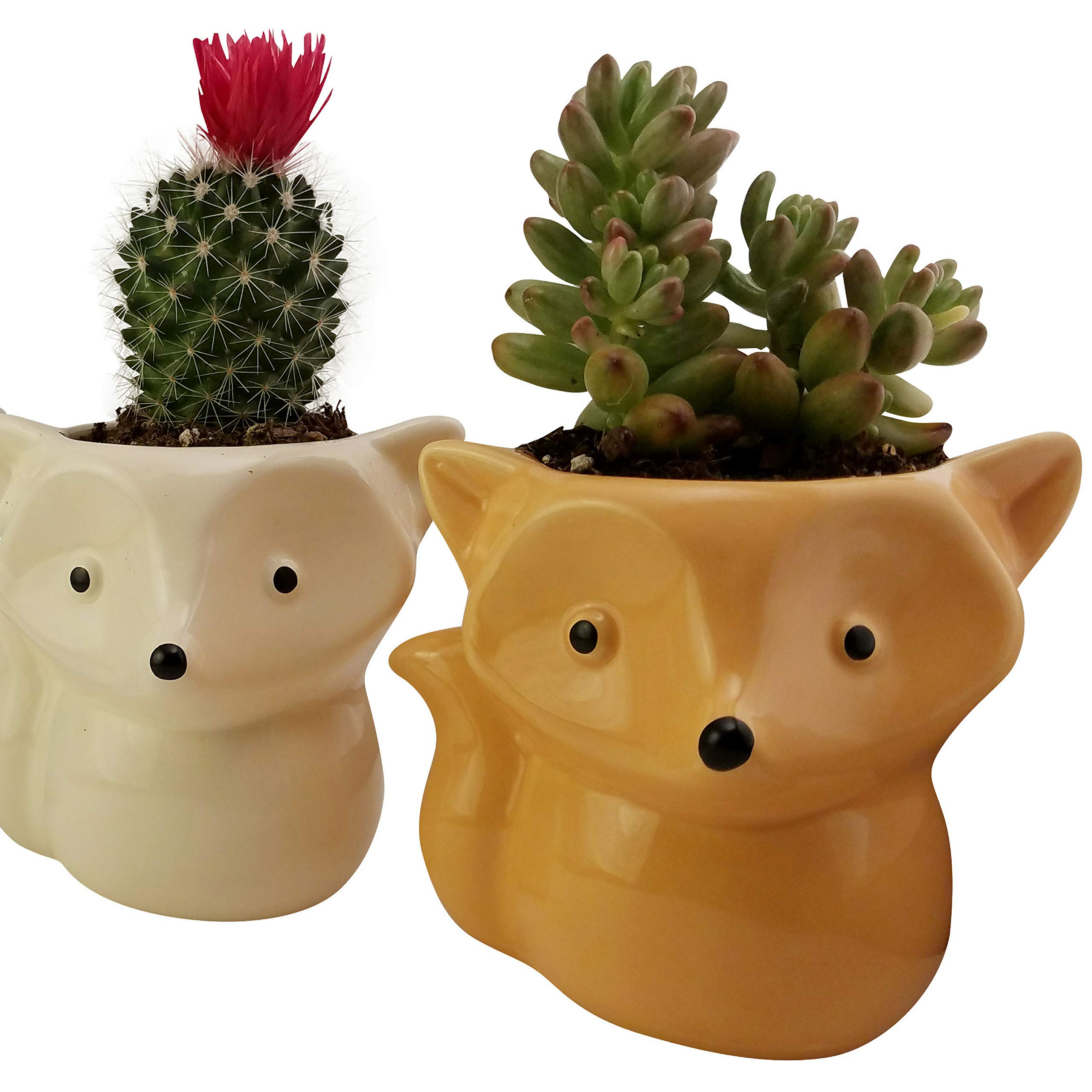 Rayliad Set of 4 Cute Fox Succulent Pots - Pink, Yellow, Orange, Blue Ceramic Planters for Cactus and Plants - with Drainage