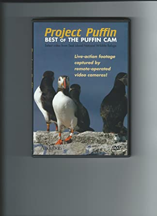 Amazon com: Project Puffin – Best of the Puffin Cam: Dr