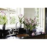 Elho 2055290 Green Basics Pot de Culture Orchidée Transparent 13 x 13 x 12 cm