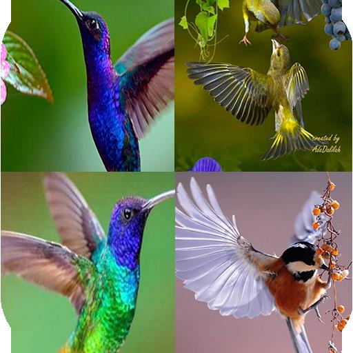 Amazon Com Bird Wallpaper Apps Games