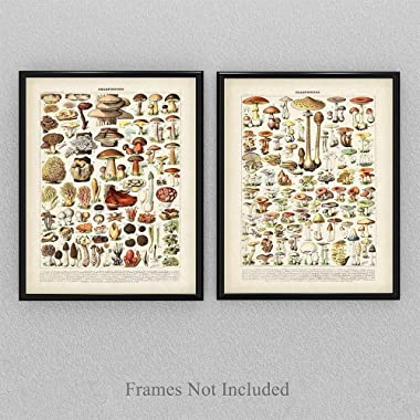 Vintage French Mushrooms - Set of Two - 11x14 Unframed Art Print - Perfect Vintage Home Kitchen Decor/Farm Decor, Also Makes a Great Gift Under $25