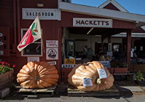 24 x 36 Giclee Print of Giant Pumpkins Make a Fall Appearance at Hackett's Orchards, which Otherwise Features Several Varieties of Apples, South Hero, Vermont, The Southern Half of Grand Isle, on 61z