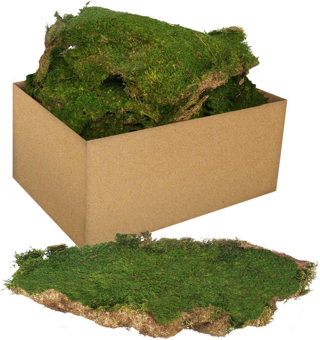 Royal Imports Fresh Dried Forest Green Moss Garden Enhancer Crafts Naturally Preserved 3 LB Bulk Case Loose Chunks for Decoration Flower Arrangements