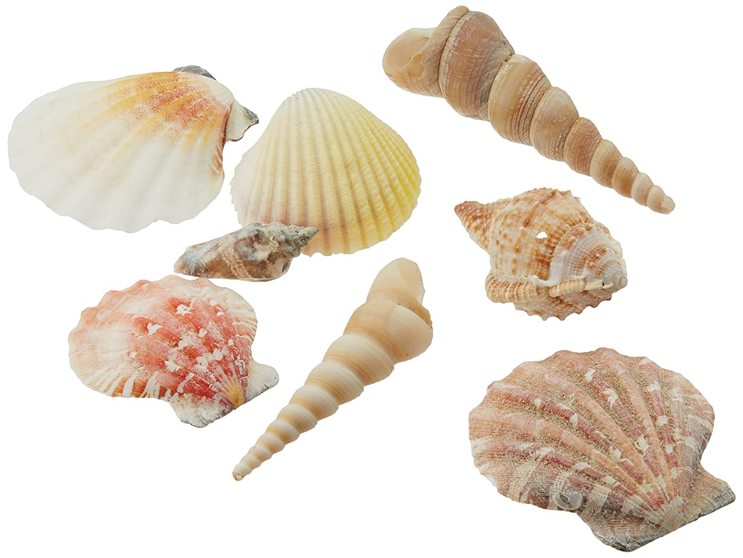 Creative Hobbies Sea Shells Mixed Beach Seashells - Various Sizes up to 2 Shells -Bag of Approx. 50 Seashells JEA-C213